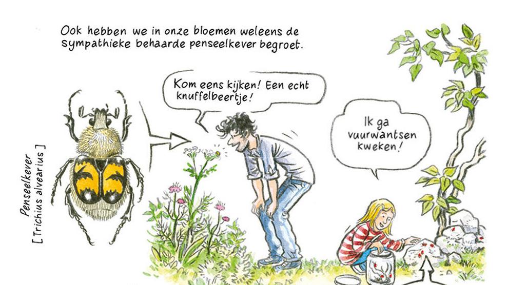 afbeelding strip De Oase